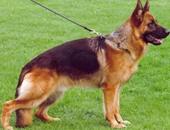إنذار كاذب من كلب بوليسى يغلق محطة نووية أمريكية