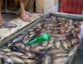 مباحث التموين تضبط 1200 كيلو سمك مجهولة المصدر قبل بيعها فى قنا