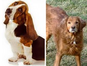 اخرج من الاكتئاب بالكلاب.. شركة أمريكية تؤجر كلابا لمن يشعر بالوحدة