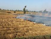 مزارع يتهم آخر بإحراق محصول الذرة خاصته بجرجا سوهاج بسبب خلافات عائلية