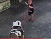 """بالفيديو.. حينما يحاول طفل تحريك """"بولدوج"""".. الجرأة حلوة مفيش كلام"""