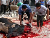 مدير مجازر أسوان: غرامة من 4 إلى 10 آلاف جنيه حال ذبح الأضحية فى الشارع