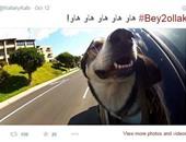 """أشهر حسابات الكلاب المنافسة مع """"فيلاى"""" على تويتر..ولانستجرام معايير أخرى"""