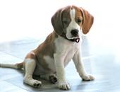 إدانة رجل عض كلبا فى أمريكا بتهمة تعذيب الحيوانات