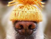 بالصور.. شاب ألمانى يكرس حياته لتصوير أنف كلبه