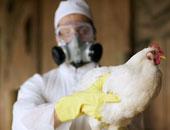 """""""الخدمات البيطرية"""": وصول البؤر المصابة بأنفلونزا الطيور لـ299 بـ25 محافظة"""