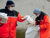 إعدام 50 ألف دجاجة لإصابتها بأنفلونزا الطيور ببنى سويف