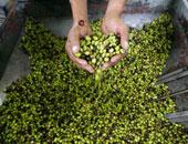 ضبط مصنع للزيتون المخلل يستخدم الصودا الكاوية بالإسكندرية