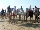 الوادى الجديد تستعد لاستضافة مهرجان الهجن العربية بمشاركة دول عربية