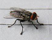 رئيس قسم الحشرات بعلوم القاهرة يكشف سبب انتشار الذباب والبعوض