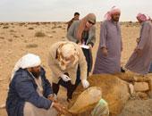 بحوث الصحراء: مشروع لزراعة الجيتروفا بسيناء بتكلفة مليون و750 ألف جنيه