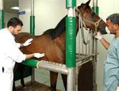 للأطباء البيطريين.. تعرف على الأوراق المطلوبة لقيد عيادتك بسجل العيادات البيطرية