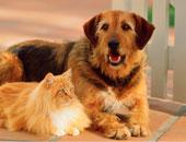 """خد بالك.. """"فرو"""" القطط والكلاب يصيبك بعدوى كورونا.. فيديو"""