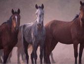 """الإنجليز والطليان والألمان بالأقصر يقبلون على """"سفارى"""" الخيول والجمال"""