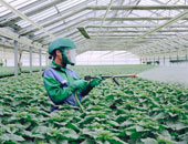 الزراعة: تحليل عينات منتجات المبيدات المطروحة تأكيدا لمطابقة المواصفات