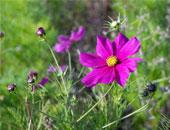 سامح لطف الله يكتب : زهراتٍ وَلُود