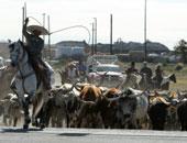 البرازيل تعلق صادرات لحوم الابقار إلى الصين بعد ظهور حالة إصابة جنون البقر