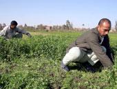 الزراعة: الدولة لم تهتم بالقطاع الزراعى فقط بل تطوير حياة سكان الريف