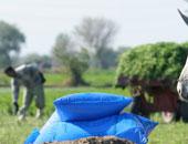 """""""الخدمات الزراعية"""": وصول 980 ألف طن أسمدة للجمعيات للمحصول الشتوى"""