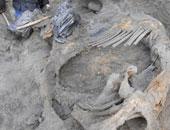 اكتشاف آثار أقدام ماموث عمرها 6 .1 مليون سنة شمالى الصين
