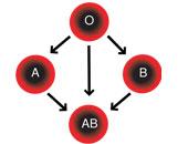دراسة: فصيلة الدم تؤثر على الصحة وتحدد فرص الإصابة بأمراض القلب