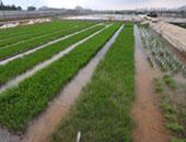 د. أحمد إسماعيل يكتب: التجربة الصينية والتنمية الزراعية