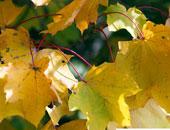 بداية فصل الخريف اليوم.. والشمس تتعامد على خط الاستواء