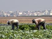 """مصدر بـ""""الزراعة"""": انتهاء وضع آليات تنفيذ وتوزيع أراضى الـ1.5 مليون فدان"""