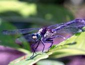 الحشرات غذاء المستقبل الجديد لاحتوائها على البروتينات