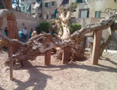 """قطاع الآثار الإسلامية والقبطية يتسلم """"شجرة مريم"""" خلال أيام"""