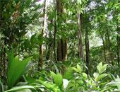 دراسة: إزالة الغابات تؤثر على تساقط الأمطار الموسمية فى الهند