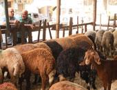 """وزارة التموين تعلن توفير """"خروف العيد"""" للمواطنين بالتقسيط على 12 شهرا"""