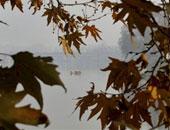 أمل همام تكتب وعاد الخريف