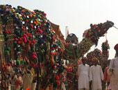 تفاصيل حرمان متسابق من مهرجان للإبل بالسعودية بسبب حقن شفاهها