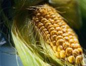 """مصرف أبو ظبى الإسلامى يخفض حصته ب""""الوطنية لمنتجات الذرة"""" إلى 4.1%"""