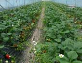 """""""الزراعة"""" حملات مرورية مكثفة على محطات الغربلة لتوفير التقاوى الصيفية"""