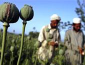 قوات الأمن تبيد 12 ألف شجرة أفيون بعد مداهمتها لمزرعة بجنوب سيناء