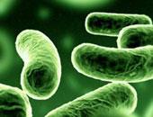 """ابتكار جهاز جديد لرصد مرض """"الاخضرار البكتيرى"""" فى الموالح"""