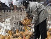 """""""الزراعة"""": حملات مكثفة على أسواق ومزراع الدواجن بحثنا عن إنفلونزا الطيور"""