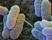 ماذا تعرف عن بكتيريا السالمونيلا وما هى طرق الوقاية اللازمة؟