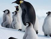 """""""السلام الأخضر"""" يطلق حملة دولية لحماية الكائنات البحرية فى القطب الجنوبى"""