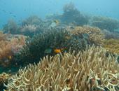 """تعرف على أول وثيقة تأمين مستدام على """"الشعاب المرجانية"""" فى العالم"""
