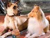 سلطنة عمان تحظر استيراد فصائل خطرة من الكلاب