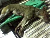 كلب ضال يعقر 36 شخصا بمنطقة سيدى بشر بالإسكندرية