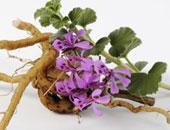 """أكاديمية البحث العلمى تنظم ورشة """"النباتات العطرية فى مصر"""" اليوم"""