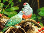 الطب الوقائى: حظر استيراد طيور الزينة بسبب فصيلة جديدة لأنفلونزا h5n8