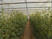 """تعرف على مميزات """"الصوب الزراعية """" لمواجهة تغيرات المناخ  وحماية المحاصيل"""