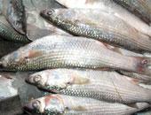 شعبة الأسماك: ارتفاع أسعار البورى والبلطى فى الأسواق