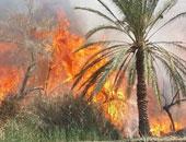 حريق بمجموعة من النخيل والأشجار بشارع الهرم والإطفاء تحاول السيطرة