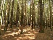 علماء يدعون إلى زراعة مزيد من الأشجار لمكافحة التغير المناخى